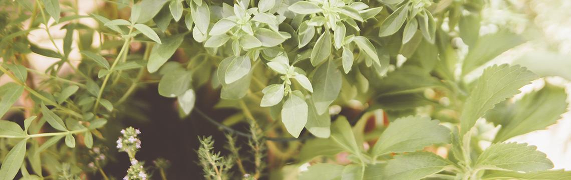 Phytothérapie-Santé naturelle-Naturopathie.