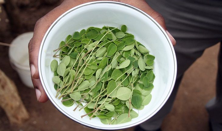 moringa-leaves-nutrition-naturopathie